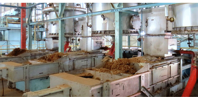palm oil extraction