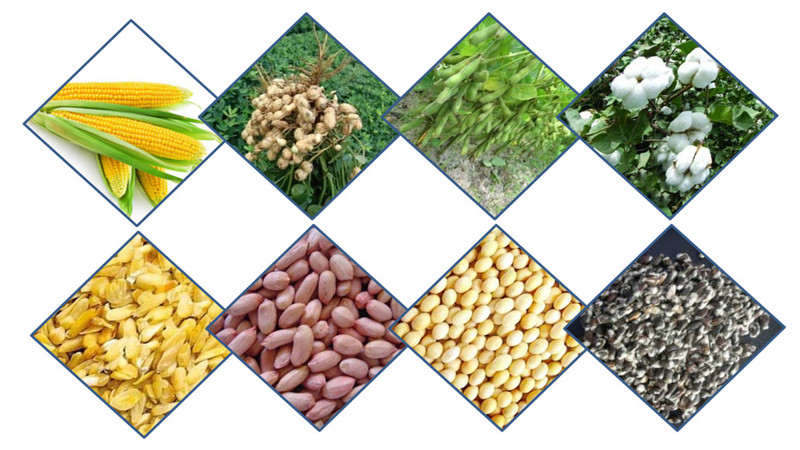 various kinds of oil seeds